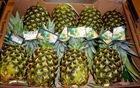 Fresh Golden Pineapple