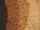 Black Wheat Flour