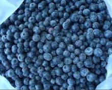 IQF blueberry
