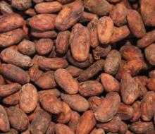 Dried Cocoa Seeds