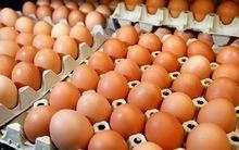 Farm Fresh Brown Table Chicken Eggs