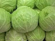 High Quality Fresh Cabbages for sale