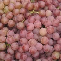 Red Global Grape for sale