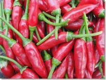 Fresh Red Chilli/ Hot Chili/ High quality
