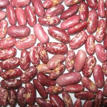 2016 Top Quality Red Speckled Kidney Beans