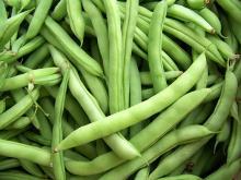 2016 Fresh Green Beans