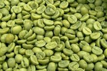 green coffee beans,screen 16 up,arabica type
