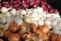 Best Quality Fresh Onion