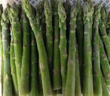 2016 new crop asparagus, Chinese asparagus