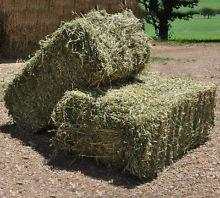 Quality Alfalfa Hay,Timothy Hay and Bermuda Hay Now in Stock