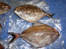Fresh Black Pomfret