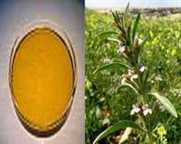 Lallemantia oil