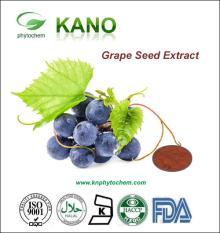 High Quality France Grape Seed Extract 95%OPC  Vitis  vininfera L.