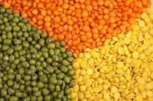 100% Red Split Lentils & Green Split Lentils , Lentils Beans Suppliers for Sale