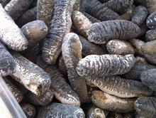 Quality Dried and Frozen Sea Cucumber