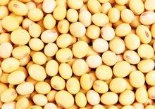 Best Quality Frozen Soybean kernels