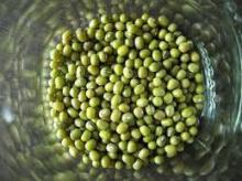 Good quality Green and black Mung Bean, grade AAA