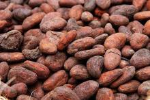 Cacao Bean / Cocoa (Organic Certified) Natural Cacao Beans