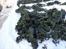 Ulva lactuca dried seaweed