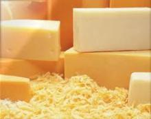 Hard Cheddar Cheese in bulk for export