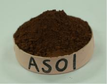 Supply Alkalized Cocoa Powder (cacao polvo) 10/12 AS01 For trading