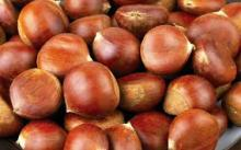 2015 High Quality Bulk Chestnut in Brazil