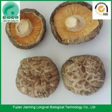 Dried Shiitake Mushrooms Price Per Pound