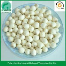White Fresh Lotus Seeds