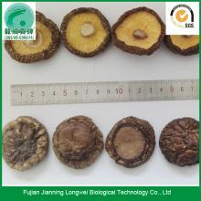 Chinese black forest mushroom donko shiitake price