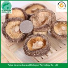 Dry shiitake mushrooms price per pound