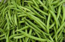 IQF cut green beans ,Frozen cut green beans
