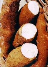 Tapioca Starch/ Cassava starch with high quality