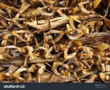 Quality Cod StockFish / dried StockFish For sale.