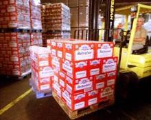 Budweiser beer in stock