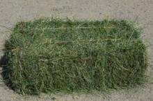 alfafa hay for animal consumption