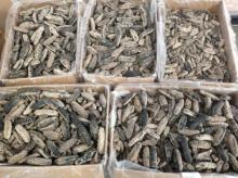 Dry Sea Cucumber white teat fish, black teat fish, curry fish, sand fish, lolly fish