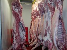 A Grade frozen pork meat for sale