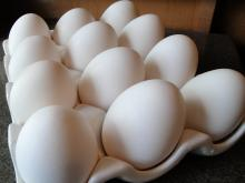 Fresh white Chicken Eggs for Exporting