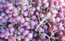 Fresh Grapes seedless