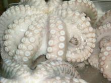 Frozen   Octopus  for Sell