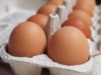 Fertile Parrots Egg for Sale