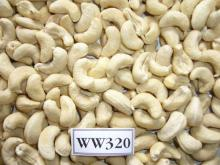 HIGH QUALITY CASHEW NUTS WW450, WW320, WW240