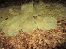 Gnetum Gnenom Crackers