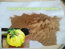 Garcinia Cambogia Extract Powder HCA Hydroxycitric Acid