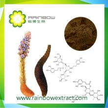 Cistanche Tubulosa Extract Cistanche Extract