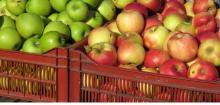 Fuji Apple/fresh Apple for sale