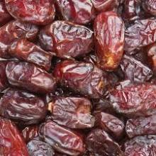 dried dates fresh dates importers