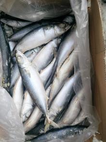 400-500g seafrozen mackerel