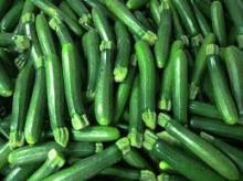 Fresh green spring hybrid zucchini