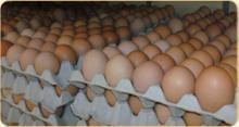 Farm fresh chicken eggs/ Duck eggs
